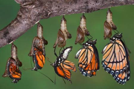 butterfly-evolution-big.jpg