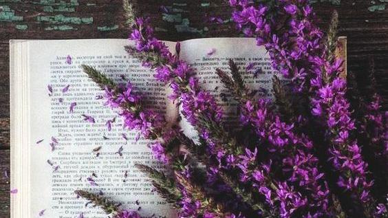 """Citind-o pe Corina Cîndea. Cartea """"Pasiune și satinroșu"""""""