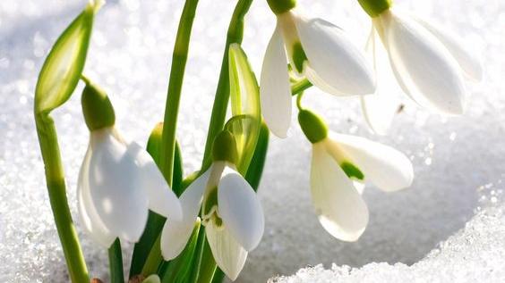 Vestitorul Primăverii!